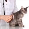 Ветеринарные клиники в Привокзальном